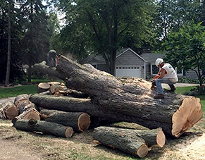 Tree Services Company Highland MI - The Michigan Property Network - home