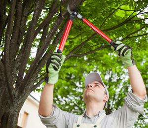 Tree Trimming and Tree Pruning Company Highland Michigan - tree-pruning-and-trimming