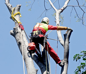 Tree Removal Service Highland Michigan - 24/7 Emergency Service - tree-removal-and-trimming